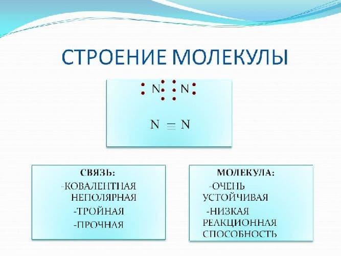 Круговорот азота в природе – схема и описание