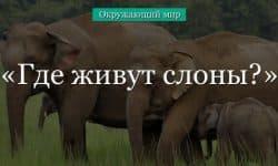 Где живут слоны? (1 класс, окружающий мир)