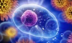 Гуморальный иммунитет - характеристика, механизм и факторы