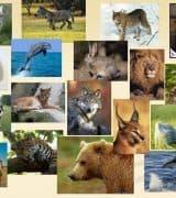 Отряды млекопитающих - классификация, характеристика и таблица с представителями