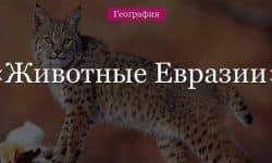 Животные Евразии – какие обитают, список животного мира
