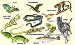 Хордовые животные - общая характеристика, классификация и особенности строения
