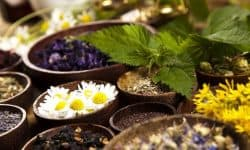 Лекарственные растения - описание по окружающему миру для 2 класса