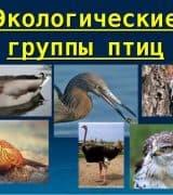 Экологические группы птиц - классификация, виды и среда обитания