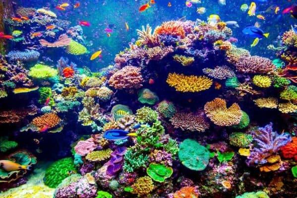 Подводные сообщества- как рыбы-санитары поддерживают чистоту водоемов