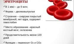 Эритроциты в крови где образуются, строение, функции и продолжительность жизни, что значит повышенные эритроциты, какая норма, где в организме человека происходит разрушение эритроцитов