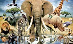 Классификация животных - признаки, характеристика и примеры представителей