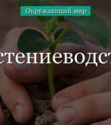 Растениеводство (3 класс, окружающий мир) – какие потребности удовлетворяет?