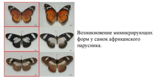Формы естественного отбора в таблице – движущая, стабилизирующая и дизруптивная