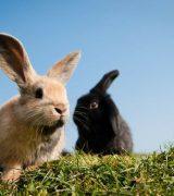 Сообщение о кролике - описание животного, виды и среда обитания