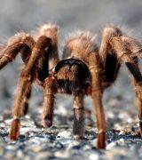 Ноги паукообразных - описание, особенности строения и количество