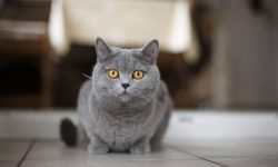 Сказочная история про кошку - короткие рассказы о приключениях питомца