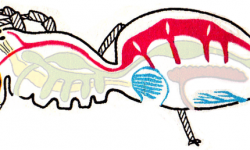 Кровеносная система паукообразных - характеристика и особенности строения