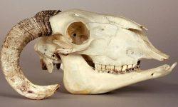 Растительноядные животные - описание, характеристика и примеры с названиями