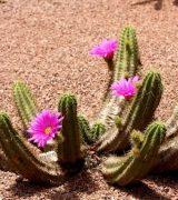 Сообщение о кактусе - описание, характеристика и интересные факты о растении