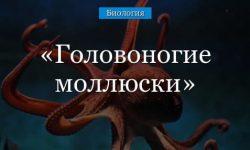 Головоногие моллюски (7 класс) – кровеносная система представителей