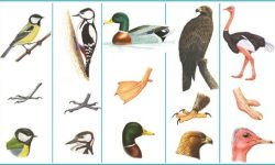 Класс птицы - характеристика, виды и строение пернатых