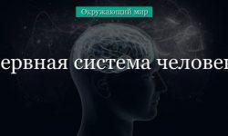 Нервная система человека (окружающий мир, 4 класс)