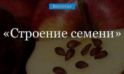Строение семени однодольных и двудольных растений, цветка и плода
