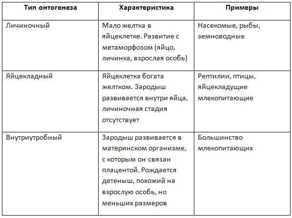 Онтогенез - определение, типы, этапы развития
