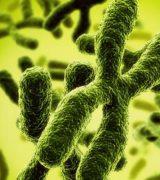Хромосомная теория наследственности - положения, сущность и значение опытов Т. Моргана