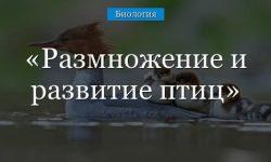 Размножение и развитие птиц кратко (биология, 7 класс)