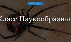 Класс паукообразные (1 класс) – общая характеристика, среда обитания и особенности для сообщения