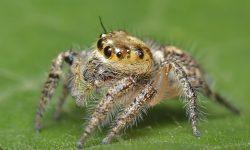 Органы чувств у паукообразных - виды, характеристика и строение