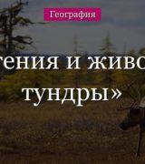 Тундра – растения и животные климатической зоны России для сообщения поокружающему миру