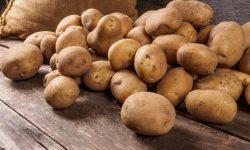 Сообщение про картофель - описание, происхождение и использование