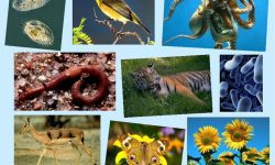 Уровни организации живой природы - таблица характеристик, свойства и структура