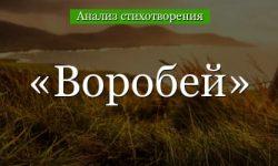 «Воробей» анализ стихотворения Тургенева по плану кратко – художественные приемы, сравнение, рифма