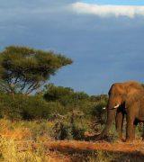 Национальные парки Африки - список и описание
