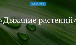 Дыхание растений – кратко и понятно о процессе (6 класс)