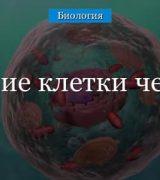 Строение клетки человека и ее функции в организме