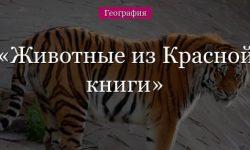 Животные из красной книги – описание зверей России списком (сообщение 4 класс)