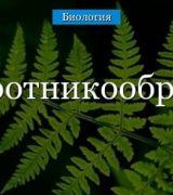 Папоротникообразные растения – таблица
