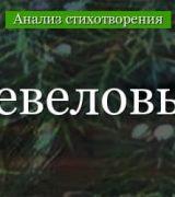 «Можжевеловый куст» анализ стихотворения Заболоцкого по плану кратко – тема, идея, история создания