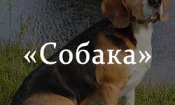 «Собака» краткое содержание рассказа Тургенева – читать пересказ онлайн