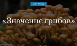 Значение грибов в жизни человека (5 класс, биология)